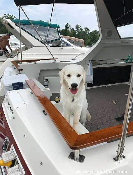 1987 Cruisers Yachts boat for sale, model of the boat is 336 Ultra Vee & Image # 3 of 11