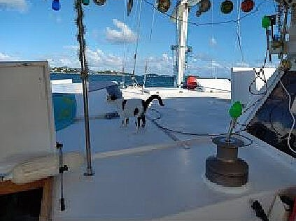 1987 Piver Trimaran boat for sale, model of the boat is 50 & Image # 11 of 31