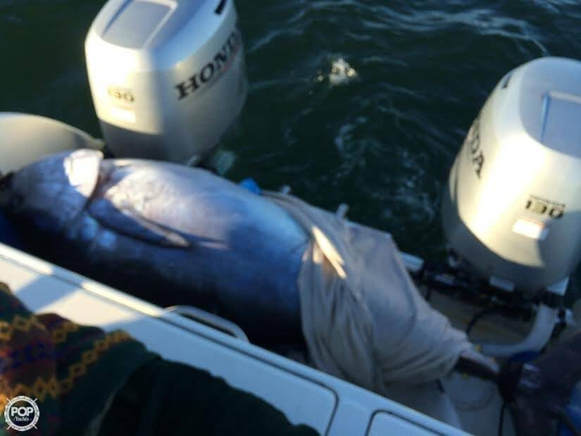 Check Out This 500 LB Tuna!